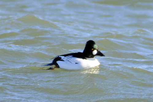 goldeneye cape feb 2011