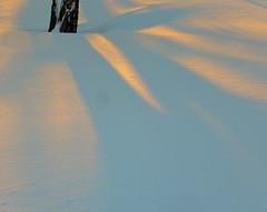 (Julia Manzerova) Tags: nyc morning sun house snow newyork tree sunrise glow shadows bronx