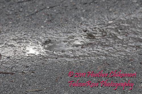 driveway_puddle