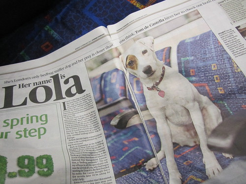 Lola the bedbug dog - Evening Standard