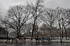 Central Park (taniapimentel) Tags: city nyc newyorkcity travel winter cidade usa newyork cold america unitedstates unitedstatesofamerica eua viagem inverno turismo bigapple frio tania pimentel fotografosbrasileiros olétusfotos taniapimentel tpimentel peopleenjoyingnature