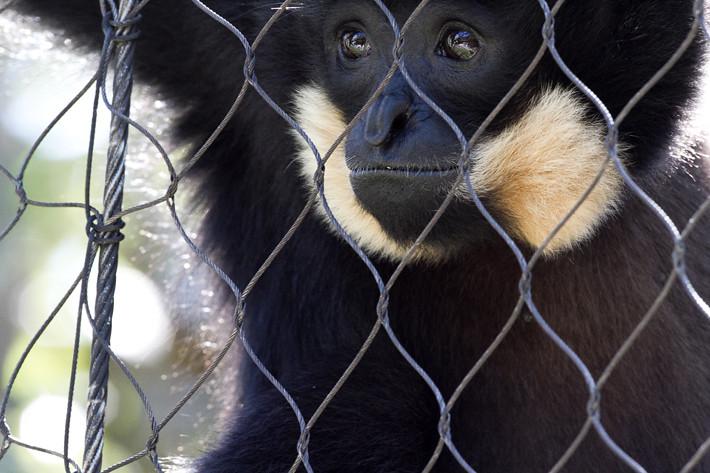 020611_zoo_animal02