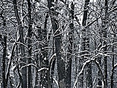 """I used the """"grittiness"""" photo editing option in picnic for this photo (debstromquist) Tags: winter snowfall snow wolfrd forestpreserves cookcoforestpreserves saltcreekdivision bemiswoodsnorth grittiness picnic 2009 goinghome throughthecarwindow"""