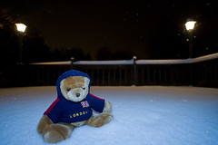 Brit the Bear dons his hoodie... (tbower) Tags: winter ohio snow geotagged nikon raw nef flash humor sb600 stuffedanimal fillflash iwasbored cs5 stofendiffuser canalfultonohio d3s starkcountyohio nikkor1424f28