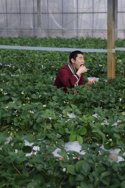 イチゴを喰らう人