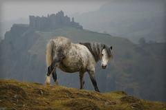 Wales Castle Horse (Dean of Photography) Tags: england horse mountains castle wales landscape europe hills pony carregcennen ambiance bigmomma thepinnaclehof kanchenjungachallengewinner k2challengewinner tphofweek86 favescontestfavoriteson