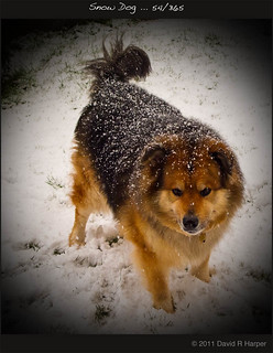 Snow Dog ... 54/365