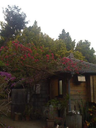 oldstyle Okinawa house