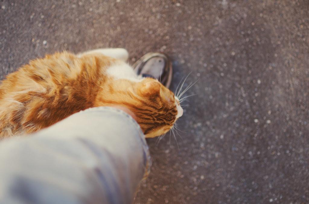 Random street cat