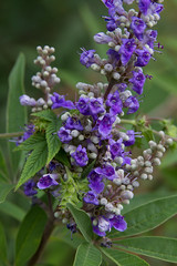 stritz-1639.jpg (jstritz) Tags: flower fhsp