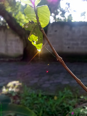 Sundrop (Vitor Chiarello) Tags: sun sol sunshine rain mobile lights phone 5 chuva motorola luzes gota sundrop bela ilha sunbeam raindrop ilhabela zn5 clelular motozine