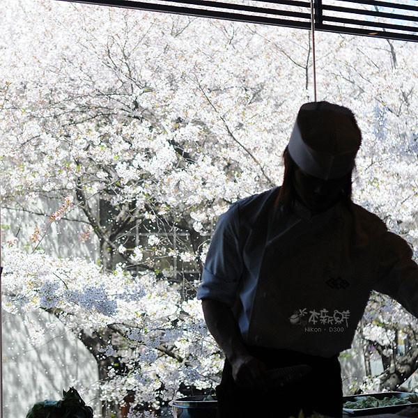 白色櫻花雪