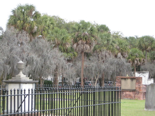 Palmetto Lined Cemetary