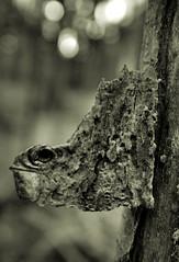 lizard bark (justyourcofchi) Tags: uk bw white black tree forest model woods flickr photographer charlotte arnold chi bark lizzard farnborough chiarnold justyourcupofchicom justyourcupofchi