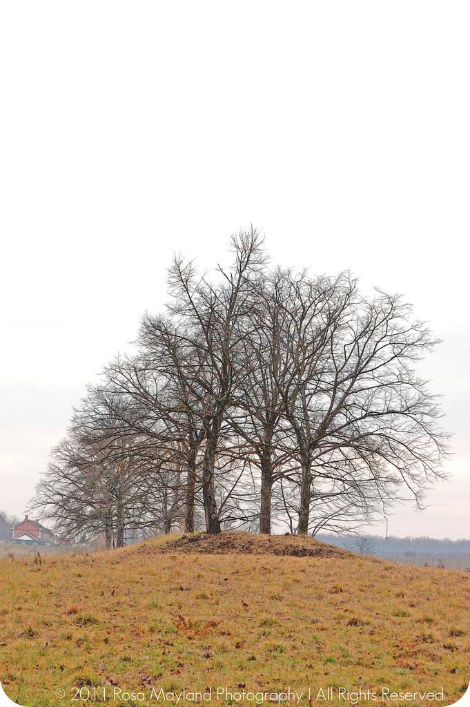 Spring Sierne Trees 1.1 bis
