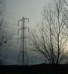 steel tree (kattabrained) Tags: