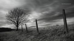 When the wind blows (part II) (elkarrde) Tags: sky bw tree nature clouds landscape ir blackwhite pentax dramatic highcontrast infrared 1855 twop da1855 justpentax pentaxk100dsuper smcpentaxda1855mmf3556 k100ds ir720 pentaxart tianyair720nmfilter