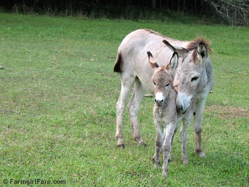 The Daily Donkey 37