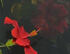 20110312_1383 (D J Rosen) Tags: vanagram
