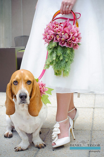 Floral Purse & Floral Dog Collar