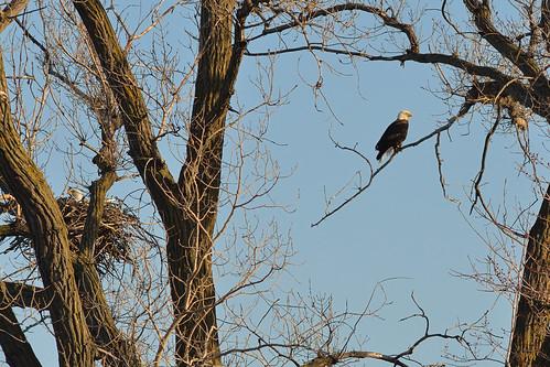 Eagles DSC_5911