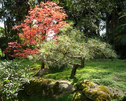 Japanese Garden 3