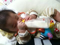 ひとりでミルク飲むとらちゃん(トゲゾーに支えてもらってますが)