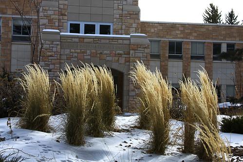 UW Campus in Winter