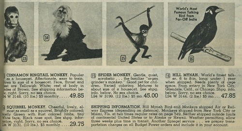 Spiegel 1963 monkeys and mynahs