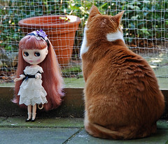 Ereprijs & Scully. (Athanassia) Tags: red white cat kat doll lace tabby pop veronica blythe neo rood wit takara tomy scully hasbro htk cwc ticked cyper