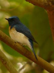 P1150829 (babsybou) Tags: travel india birds silent watching kerala du valley yatra sud inde attapadi birdswatching babsybou malleeshwaramjunglelodge pettickal