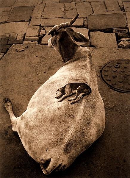 Pentti Sammallahti, Varanasi, India, 1999