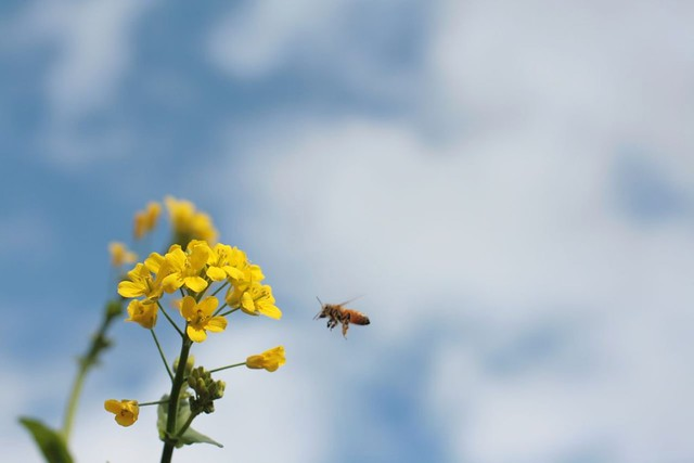 bee spotting
