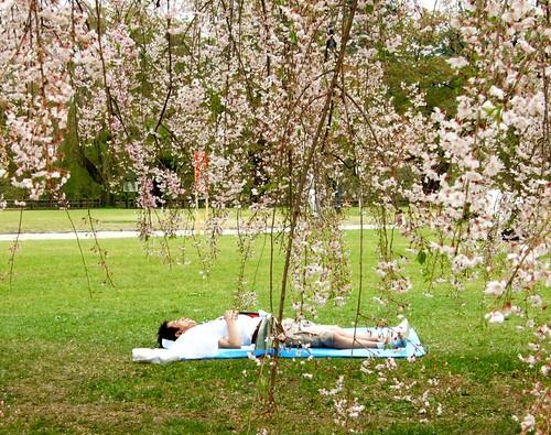 還有人在樹下睡午覺
