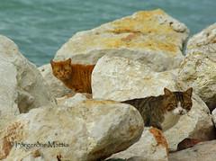 left pets (thorgerdur mattia) Tags: cats coast march greece kitties patras 2011 orgerur march2011 thorgerdurmattia orgerurmatta thorgerdur leftpets patrascoast