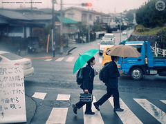 Schoolkids walking home: near Izumino, Kanagawa (Alfie | Japanorama) Tags: rain japan kids umbrella children japanese earthquake schoolchildren umbrellas raining kanagawa zebracrossing schoolboys mamiya645afd mamiya80mmf19 mamiyazdback japanafterthequake shotthroughthecarwindscreen nearyokohama