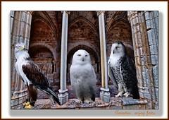 Centinelas del castillo -  Sentinels of the castle (enjoy_fotos) Tags: amadeu sx30is enjoyfotos