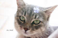 Rebelle (Rose*aime*OH! i'm late with all my comments sorry) Tags: chat love adorable kitty cat ilovemycat beautiful sweet cute
