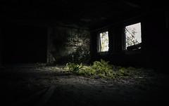 Stubenhocker (-SebsTian-) Tags: light shadow nature strikes back black green tamron 1750 sony a58