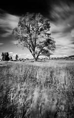 tetons_2016_25web (Jessica Haydahl Photography) Tags: grand teton national park wyoming tetons mormon row john molton barn apsens fall colors infrared photography nikon d810 d7000 pentax 645z medium formate landscape ansel adams