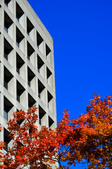 Natural colour and man-made-mono (James_D_Images) Tags: autumn fall foliage leaves buchanan building ubc vancouver britishcolumbia windows shadows pattern concrete blue sky red orange