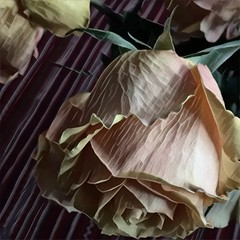 Dead roses (Renee Rendler-Kaplan) Tags: deadroses flowers gone pasttheirprime kitchen kitchentable tablecloth home indoors inside iphone iphoneography october 2016 done reneerendlerkaplan blossoms blooms chicagoist consumerist wbez chicagoreader