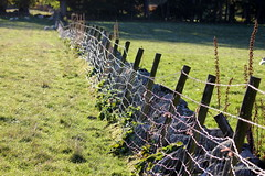 Fence or giant web? (mootzie) Tags: fence posts wooden barbed wire grass green field stone wall sheep