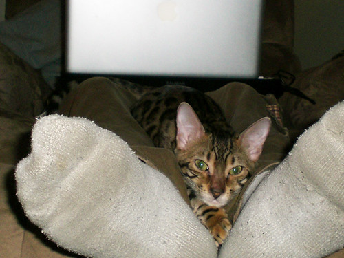 KittyLegWarmer03