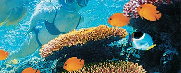 australia-corais