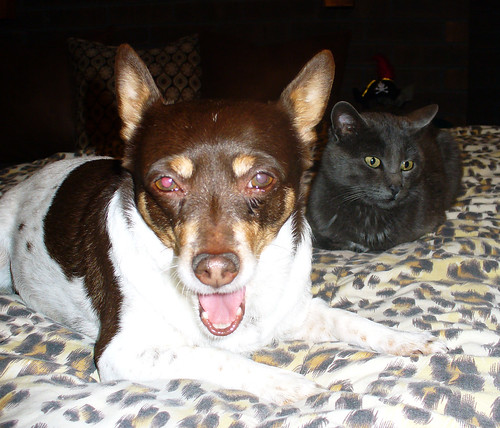 2011-01-29 - Dog-Cat Mixer - 0037