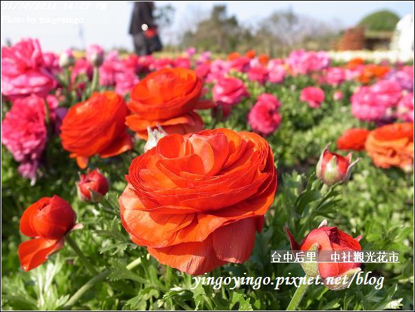 台中后里_中社光觀花市20110130_R0017618