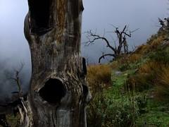monsters (Otkuda! (Gone sometimes)) Tags: wood trees winter brown mist color colour tree green nature clouds dark grey moss spain andalucia melancholy lanjaron wildfire 2011 dutchphotographer otkuda otkoeda