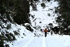 Piste forestière du San Petru : au départ du sentier de Foce Finosella