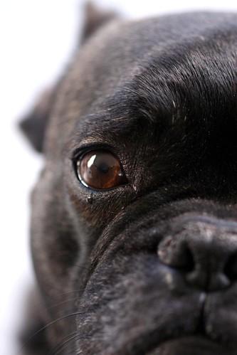 Bert met Ziel in zijn ogen